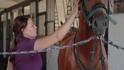 Woman Groom Is Grooming Horse in Stable in Farm