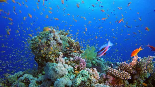 Thumbnail for Colorful Tropical Coral Reefs