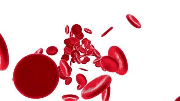 Flowing Erythrocyte aka haemoglobin cells