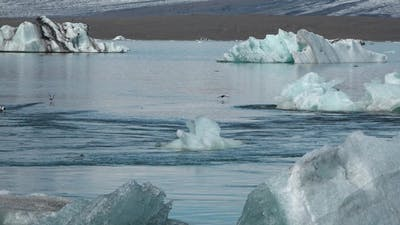 Iceland. Floating icebergs in Jokulsarlon Glacier Lagoon.