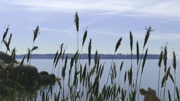 Thumbnail for Shore Grass 08