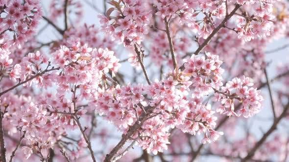 Thumbnail for Flowers Spring Season