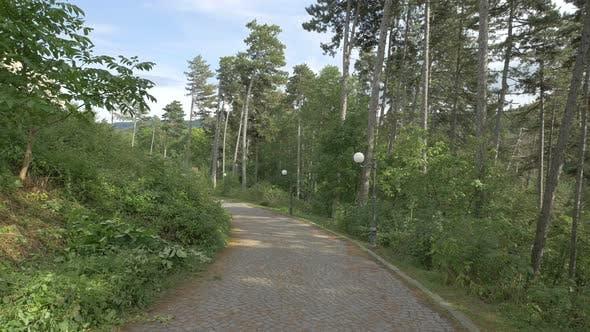 Cobblestone road and trees