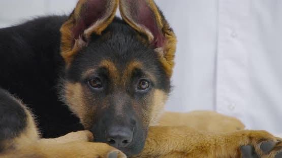 Sad Small Dark Dog Reception at Veterinary Clinic