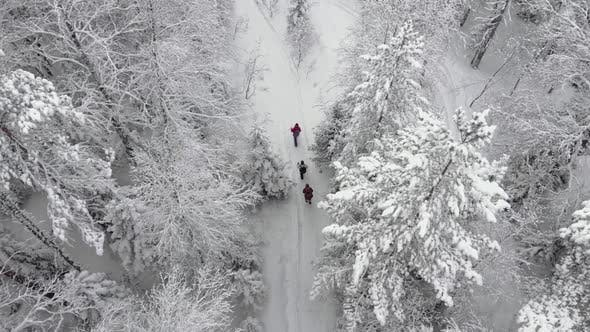 Three People Are Walking Along a Trampled Covered Path