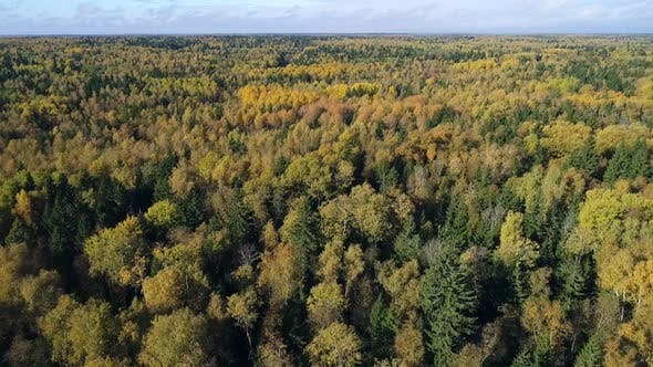 Autumn Forest In Sunlight 2 Fhd