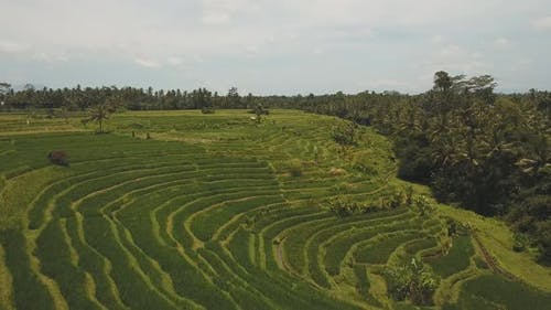 Terrace Rice Fields BaliIndonesia