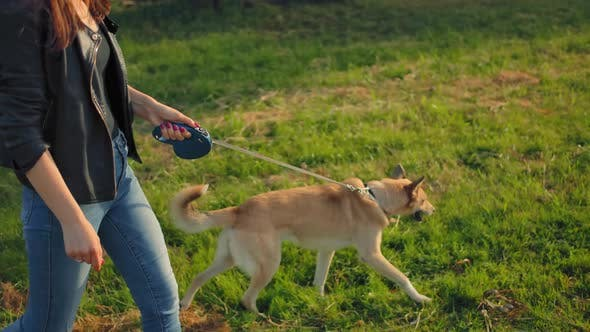 Thumbnail for A Young 20 Years Old Female Leading Her Dog for a Walk in the Park on a Leash.