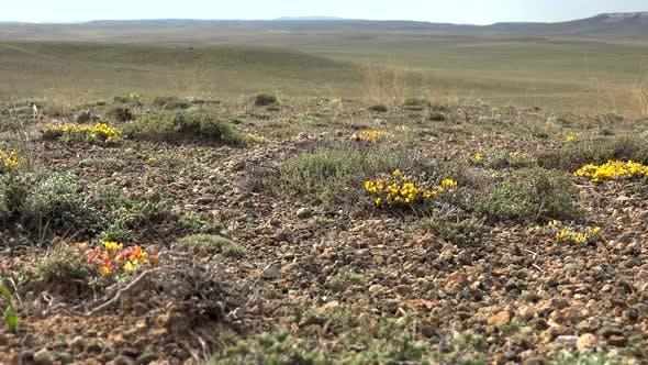 Barren Plants and Flowers on Arid Terrestrial Soil Surface