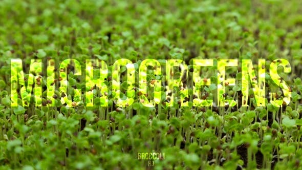 Thumbnail for Microgreens Broccoli 2