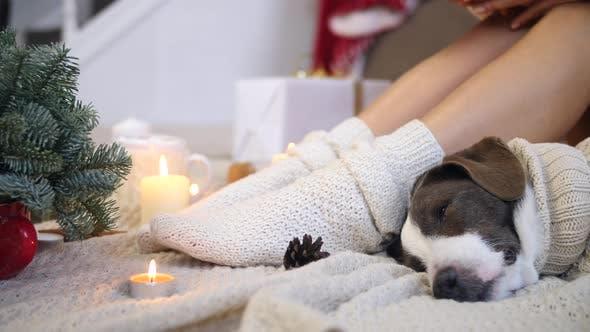 Thumbnail for Coziness, Dog, Female Legs In Knit Socks