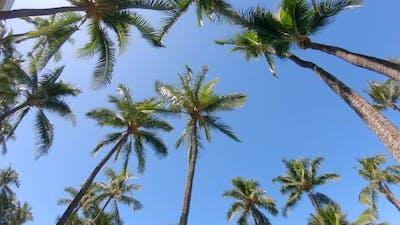Palm trees provide shade in Maui, Hawaii