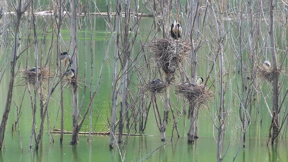 Thumbnail for Real Natural Wild Nests of Birds