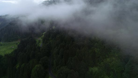 Cover Image for Fog Over The Forest And Road