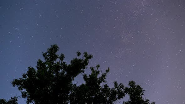 Stars in the Night Sky Rotate on the Background of a Tree Silhouette. Time Lapse
