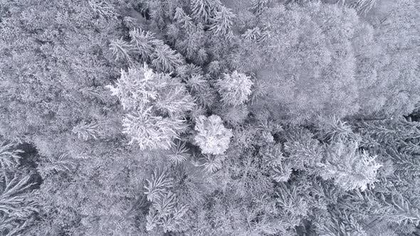 Thumbnail for Aerial Background High Above Winter Snow Covered Trees In Cold Mountain Forest