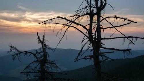 Sonnenuntergang über toten Bäumen