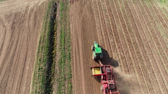 Thumbnail for Harvesting Sugar Beets