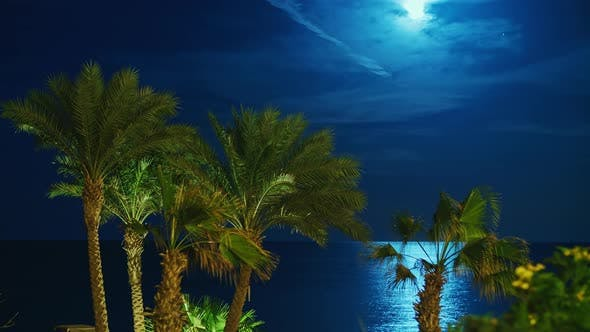 Rising Moon Over the Tropical Coast, in the Sky Flies a Real Meteorite