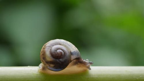 Life of snails in the nature