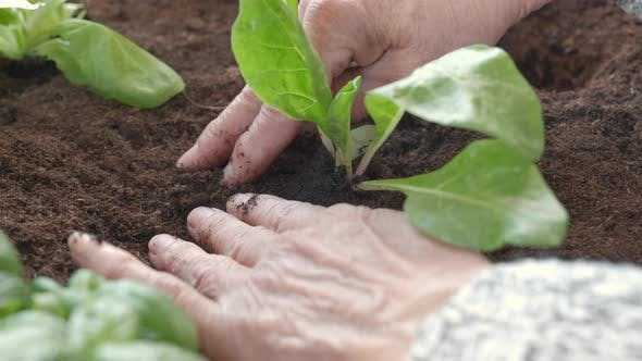 Hands Planting Vegetables Agriculture
