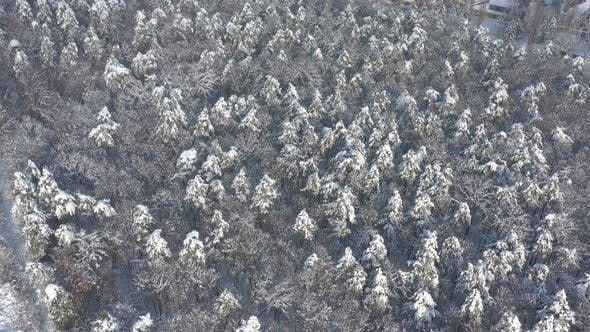 Thumbnail for Above snowed forest in December  4K aerial footage