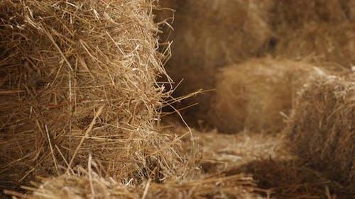 Tilting on baled hay stacks in curing process 4K 2160p 30fps UltraHD footage - Winter animal food re