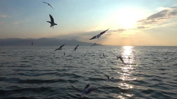 Troupeau de mouettes survolant la mer