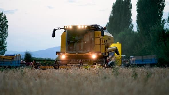 Grain harvesting combine. Combine harvester harvesting golden wheat
