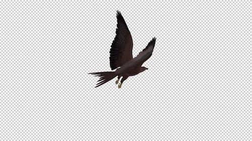 Tropical Kite - Flying Loop - Back Angle