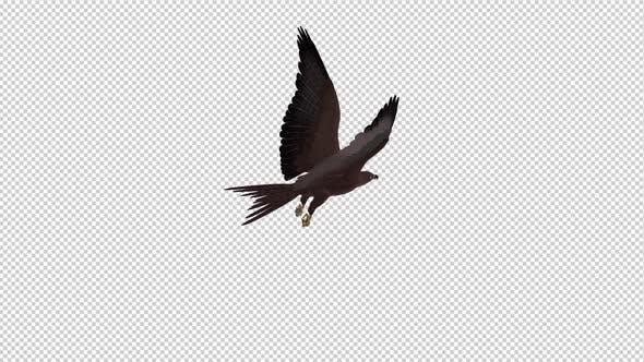 Thumbnail for Tropical Kite - Flying Loop - Back Angle