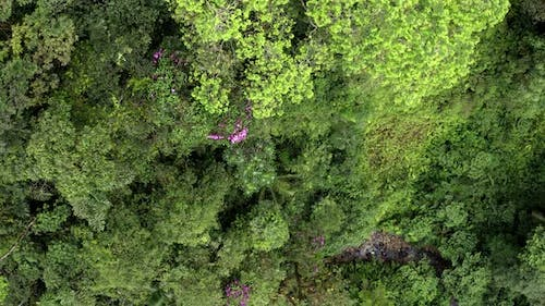 Aerial top view zooming in at a canopy with different tree species