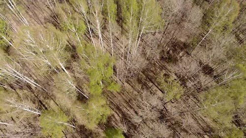 Aerial Drone Flying Over Consequences of Forest Fire