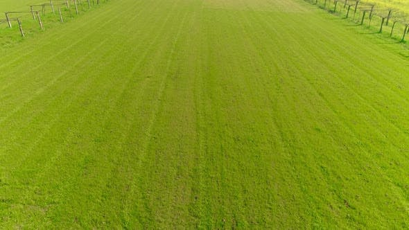Thumbnail for Flying Over Green Grass Fiel in Spring Time