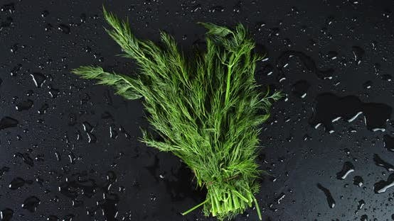 Bunch of Fresh Dill Rotates Slowly.