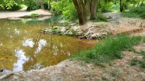 Fluff of Poplar Tree and River