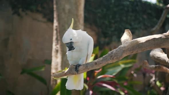 Thumbnail for un grand perroquet assis sur une branche