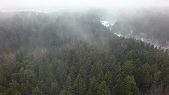 Thumbnail for Foggy Coniferous Forest in Winter, Aerial View