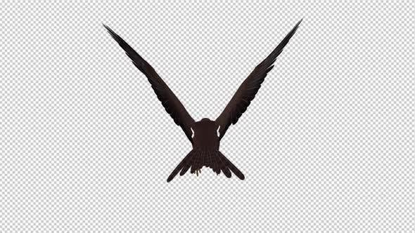 Tropical Kite - Flying Loop - Back View