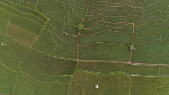 Thumbnail for Aerial view of cultivation field, Malang, Indonesia.