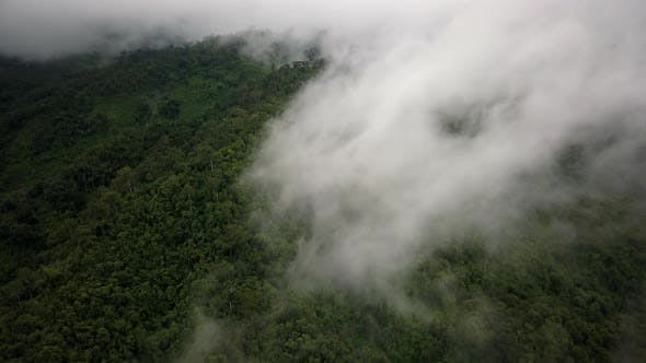 Thumbnail for Aerial View of Lush Green Rain Forest Mountain 27