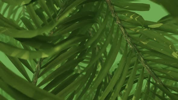 Thumbnail for Green Jungle in Tropical Green Fog