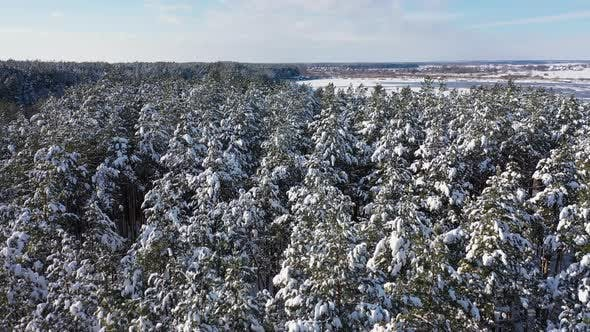 The Landscape Above Winter Forest near the Lake in Sunny Day