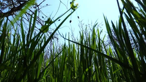 Thumbnail for Green Grass 6