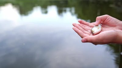 Hand holding small fish. Woman hand holding small fish outdoors on sea background