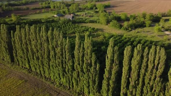 Windschutzbäume und Farm bei Sonnenuntergang