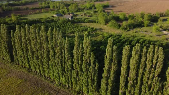 Windbreak Trees And Farm At Sunset
