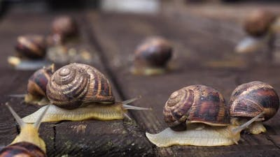 Many Live Snails Creep the Friend on the Friend