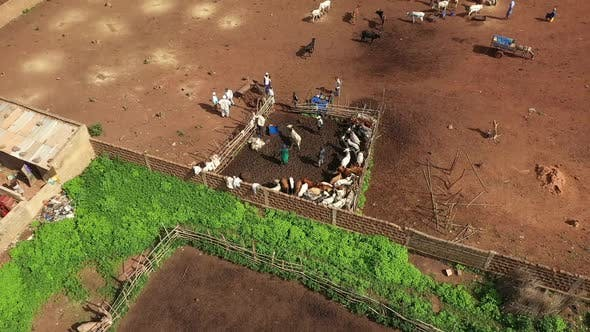 Thumbnail for Africa Mali Village And Ox Aerial View 8