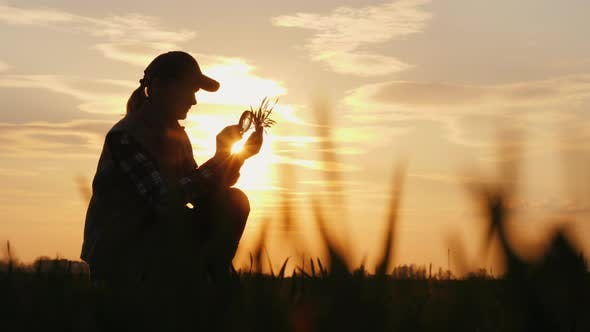 Thumbnail for A Farmer Working in the Field Is Studying Wheat Sprouts, Looking Through a Magnifying Glass